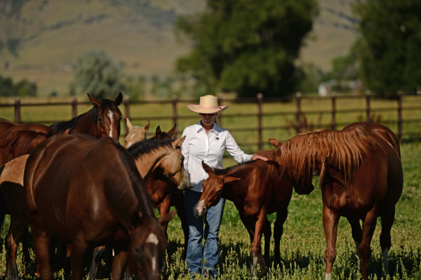LONGMONT, CO - AUGUST 15: Janiejill Tointon, owner of Diamond Double T Ranch in Longmont, is losing money everyday that her ranch remains under a quarantine because it has horses got sick with vesicular stomatitis, August 15, 2014. Vesicular stomatitis is carried by flies and Tointon said, their is a big increase in insects on her ranch after last years flooding. (Photo by RJ Sangosti/The Denver Post via Getty Images)
